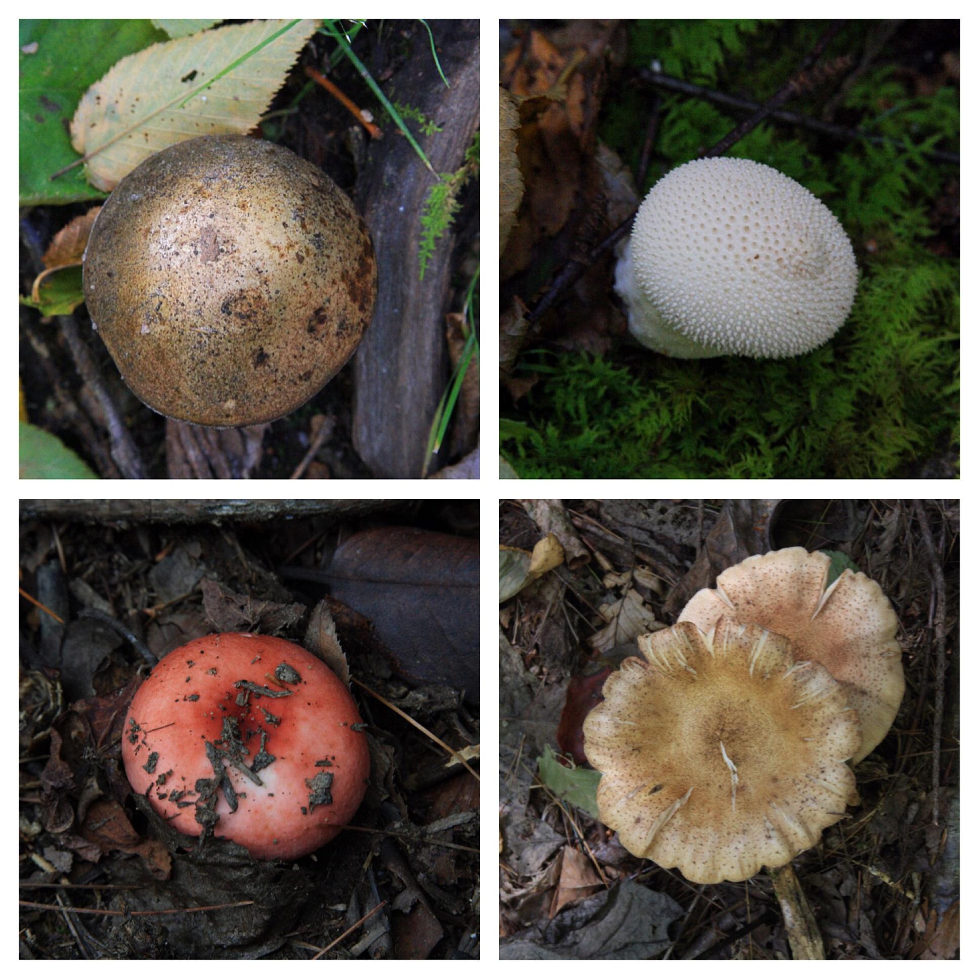 four-mushrooms