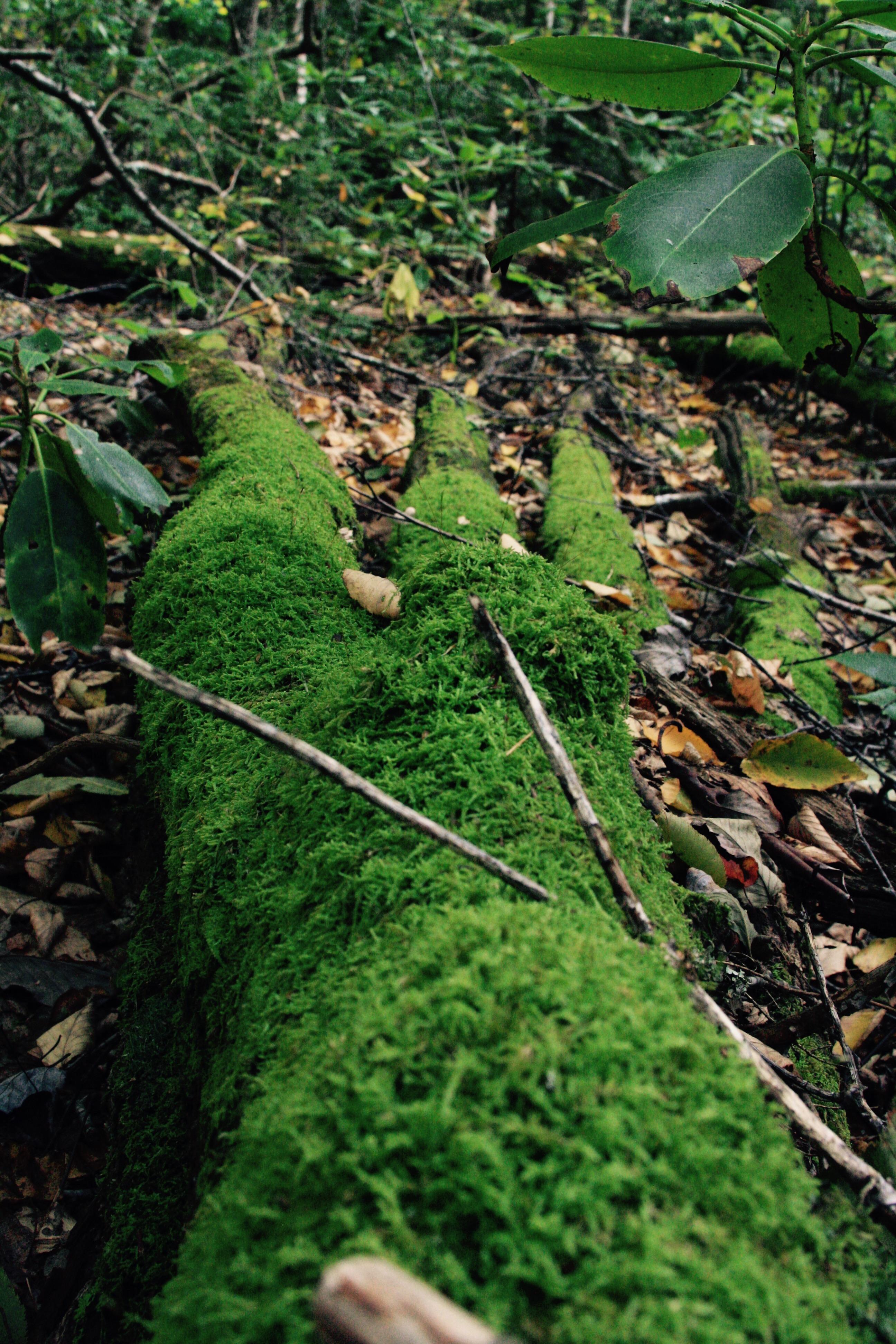 plant-footprint